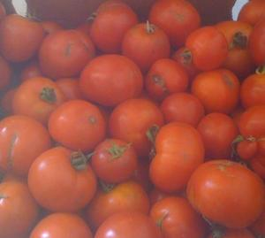 Tomatoes awaiting canning
